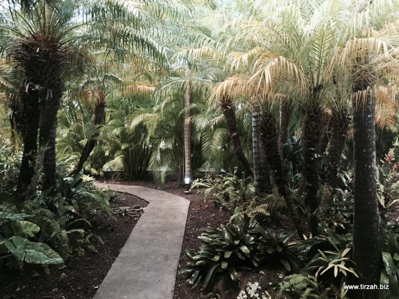7-Nevis Montpelier Rain Forest