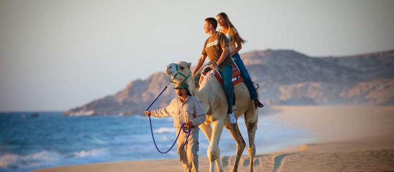 Camel Safari Los Cabos