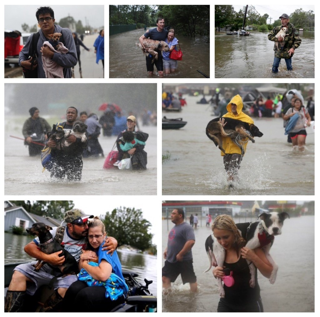 Hurricane Harvey with Pet Rescue